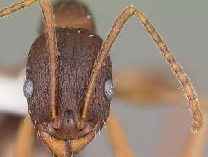 Ants rise with temperature