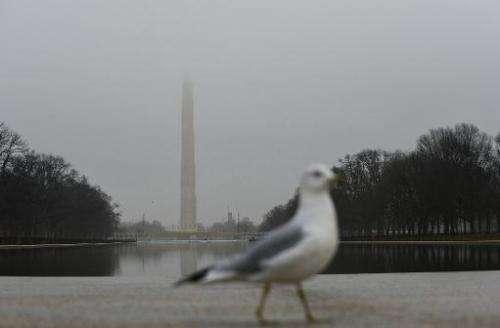 A seagull is seen on a foggy day, in Washington, DC, on January 12, 2013