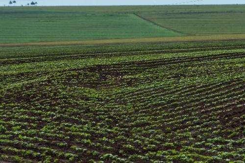 A soybean field in the Cerrado plains near Campo Verde, Mato Grosso state, western Brazil on January 30, 2011