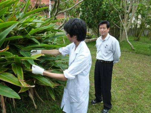 A student and Shinkichi Tawada (R), professor of the faculty of Agriculture at the University of the Ryukyus, collect samples of