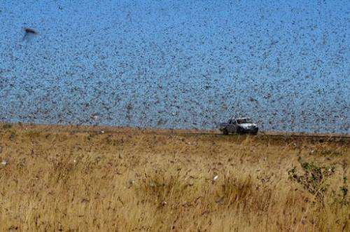 A swarm of the Red Locusts north of the town of Sakaraha in Madagascar on April 27, 2013