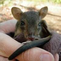 Aussie diggers linked to ecosystem decline
