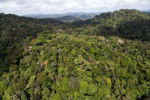 A view of the forest in French Guyana near Dorlin, on December 1, 2012