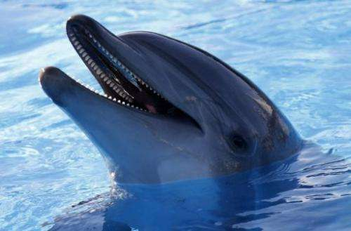 A virus that is similar to measles is suspected of causing the deaths of hundreds of Atlantic bottlenose dolphins