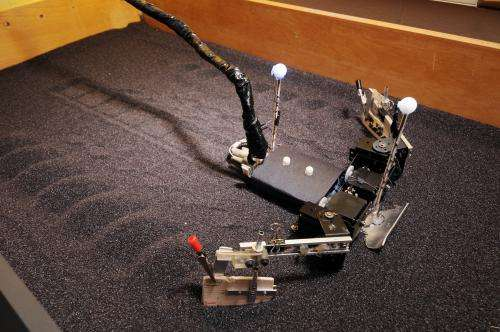 Baby sea turtles and flipper-driven robot reveal principles of moving on sand