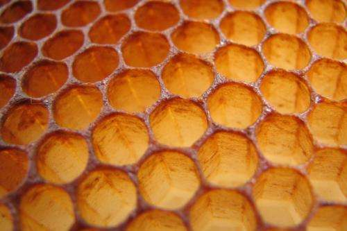 Bacteria and the bees: Antibiotics work better with honey