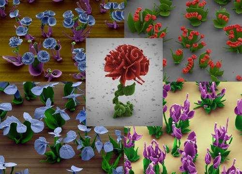 Beautiful 'flowers' self-assemble in a beaker