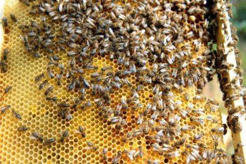 Bees and other pollinating insects are hugely important for food production, especially of fruit