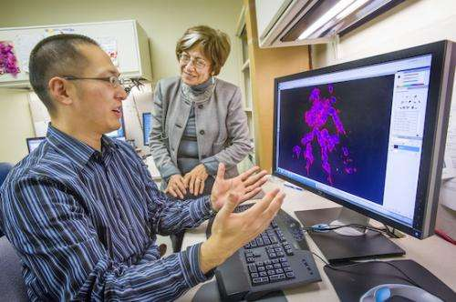 Berkeley Lab Researchers Find New Clue to Clinical Trial Failures of MMP Cancer Therapies