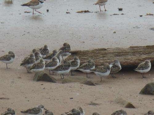 Bird buffet requires surveillance