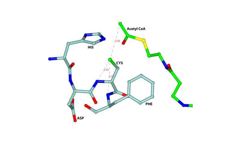 Blocking the active site of thiolase
