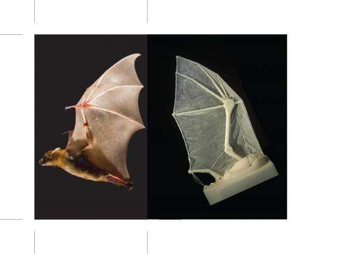 Brown University researchers build robotic bat wing