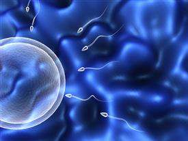 Can environmental contaminants cause lower sperm count?