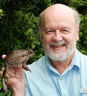 Cane toad pioneers speed up invasions