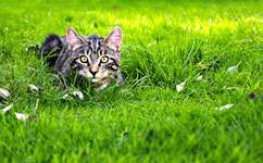 Cats could be more harmful to birds than previously suspected, scientists have discovered