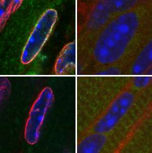 Cell biology: DNA directors discovered