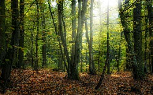 CentroGeo identifies forests with bigger potential for carbon credit