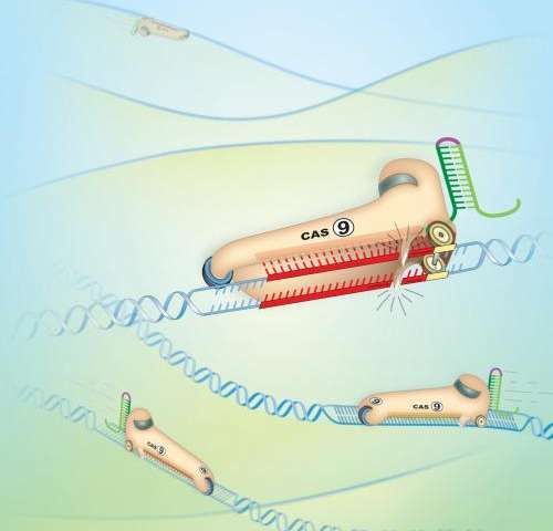 Cheap and easy technique to snip DNA could revolutionize gene therapy