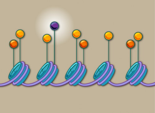 Chromatin marks the spot in search for disease pathways