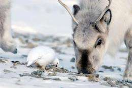 Climate events drive a high-arctic vertebrate community into synchrony