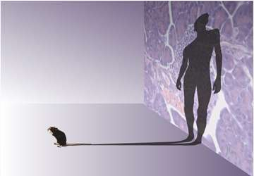 Comparing mouse and human immune systems: Few differences charted in map to translate mouse findings to humans