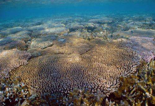 Conserving corals by understanding their genes