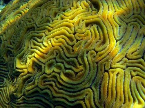 Corals surviving the ocean's pollution