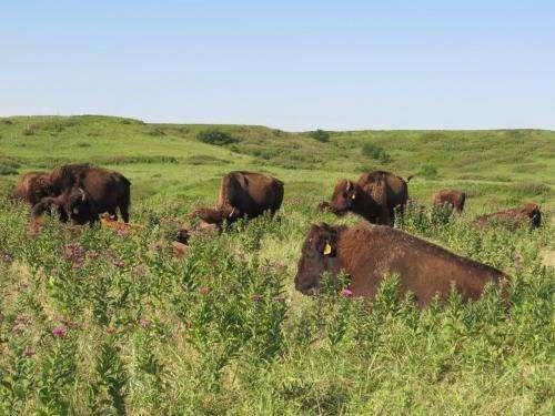 CU-Boulder-led team gets first look at diverse life below rare tallgrass prairies