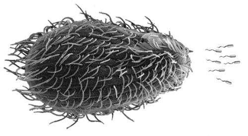 e coli in water - photo #42