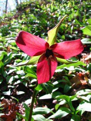 Database simplifies finding Canadian plant names and distribution