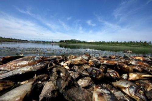 Dead fish pile up on the banks of the Hurtado Dam lagoon in Acatlan de Juarez, Jalisco state, Mexico on July 1, 2013