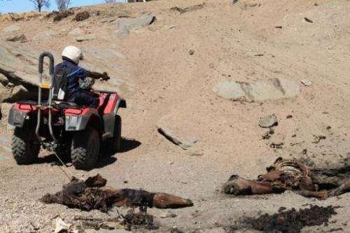 Dead horses around an empty waterhole in Central Australia