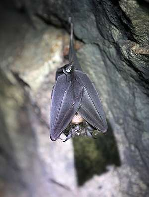 Deadly virus discovered in bats also jumps species