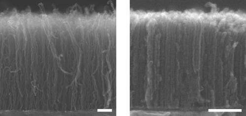 Densest array of carbon nanotubes grown to date
