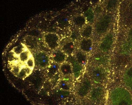 Divide and define: Clues to understanding how stem cells produce different kinds of cells