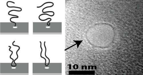 DNA prefers to dive head first into nanopores