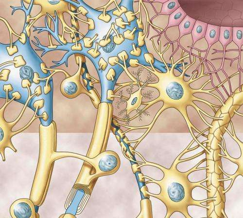 Do glial connectomes and activity maps make any sense?
