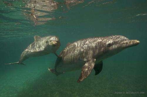 Dolphin genetic study provides revelations