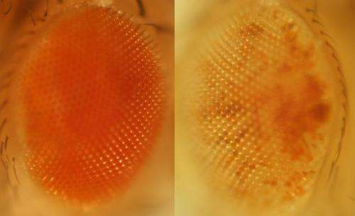 Edited RNA + invasive DNA add individuality