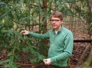 Expert helps solve 80-year mystery, as team identifies fungus killing Torreya trees