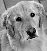 FDA probes dog illnesses tied to jerky treats