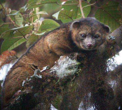 New species of carnivore discovered