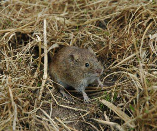 Fewer vole outbreaks across Europe risking other species