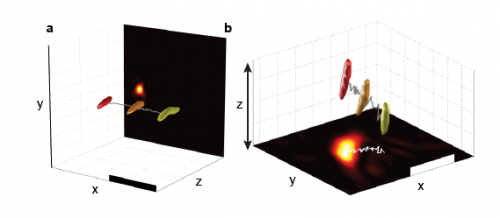 Harmonic holograms: High-speed three-dimensional imaging captures biological dynamics