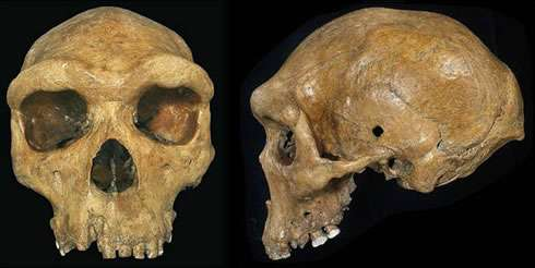 First early human fossil found in Africa makes debut