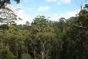 Forest monitoring technology could help in carbon accounting