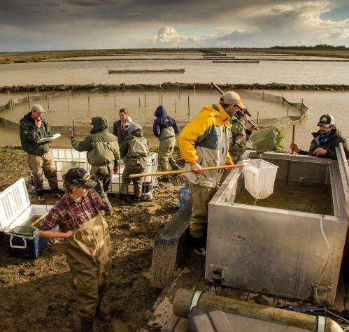 For fish and rice to thrive in Yolo Bypass, 'just add water'