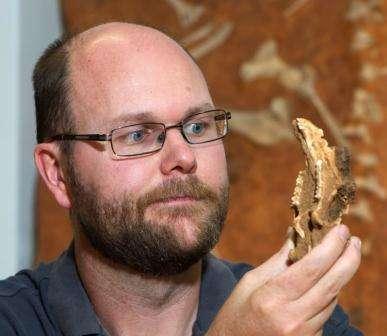 Fossils give glimpse into future