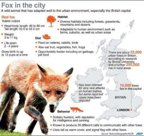 Fox in the city