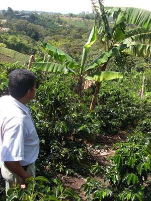 From the grounds up, study seeks sustainable 'java'